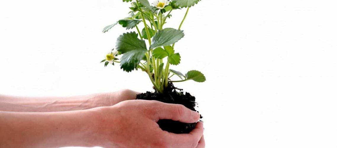 plant-164500_1280